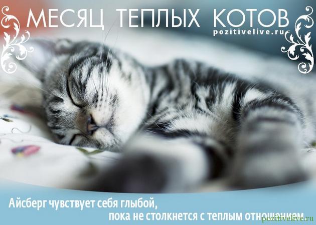 Cat 24